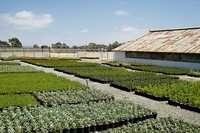 Established Wholesale Plant Provider Post Oak